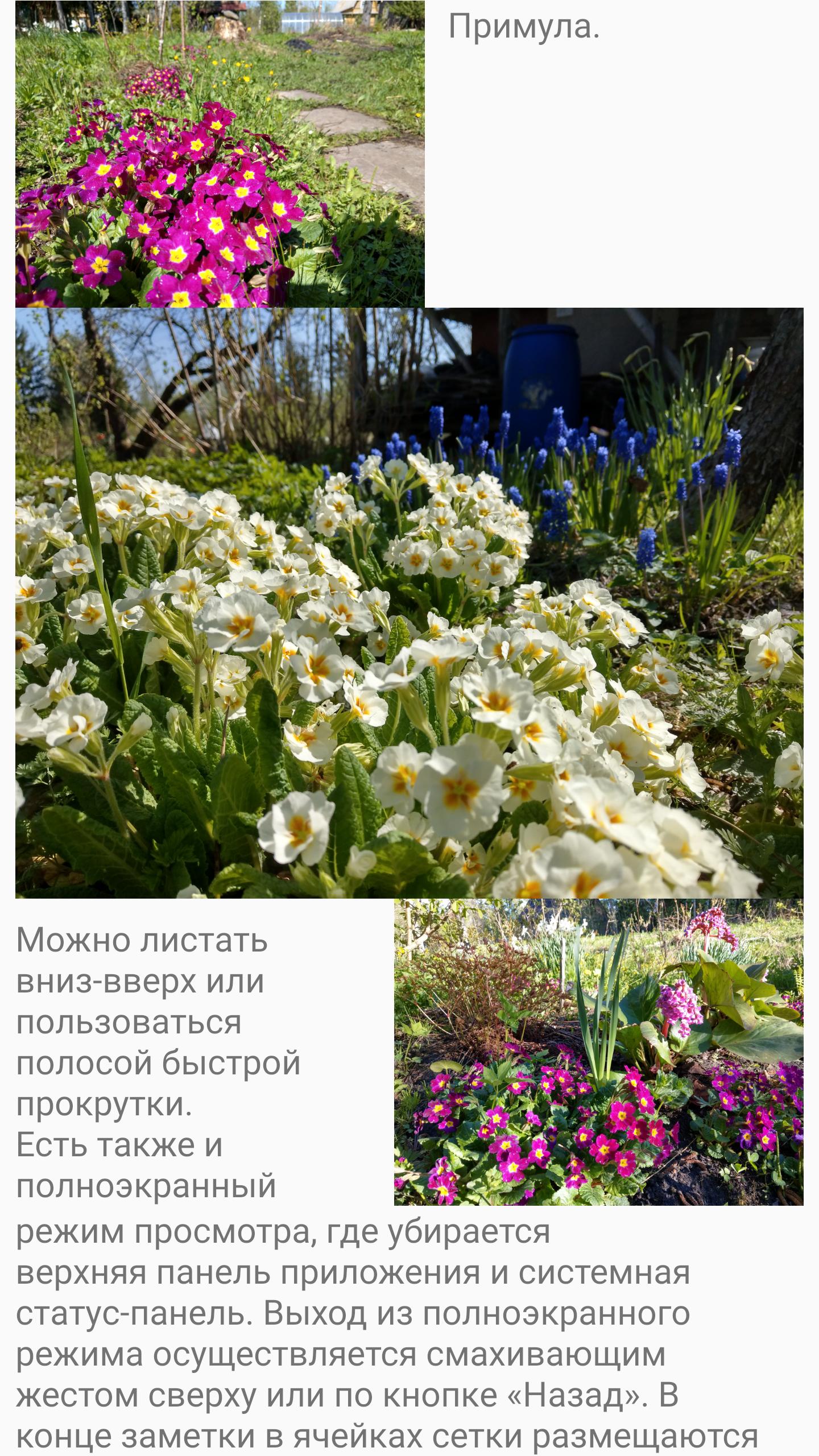 Изображения в центре и текст, огибающий изображение справа